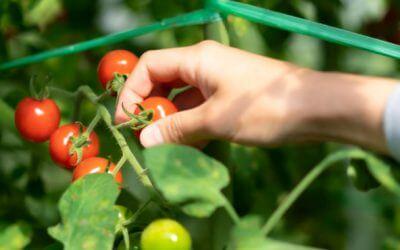 畜産堆肥が「オールインワンの有機肥料へ」!?