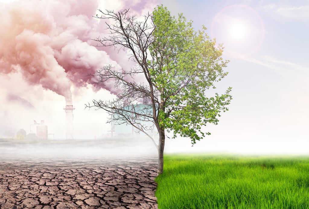環境汚染 浄化 社会的農業