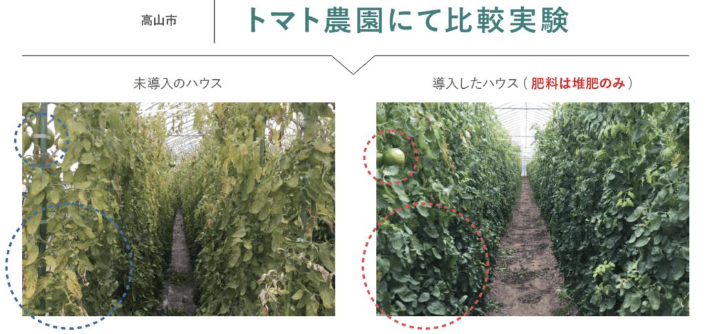 トマト リバイブソイル 有機堆肥 有機肥料 農園 有機栽培